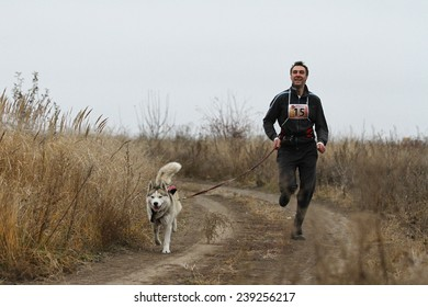 Kharkov, UKRAINE - November 15, 2014: Oleg Rudak at canicross heats during Men's 3100 m at Sled dogs dry land race Autumn Cup - 2014