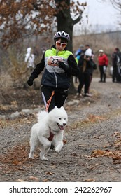 Kharkov, UKRAINE - November 15, 2014: Tatiana Yurchenko at canicross heats during Women's 3100 m at Sled dogs dry land race Autumn Cup - 2014