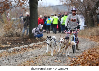 Kharkov, UKRAINE - November 15, 2014: Roman Golovko at Bikejoring with two dogs Men's 3100 m at Sled dogs dry land race Autumn Cup - 2014