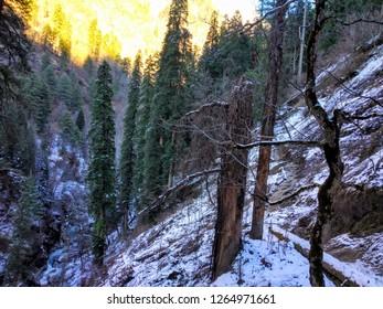 Kheerganga Trek - A 13km trek from Barsaini, which is 20km from Kasol, Kullu, Himachal Pradesh.
