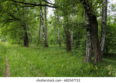 Khimki forest in Moscow region. Nature of Russia