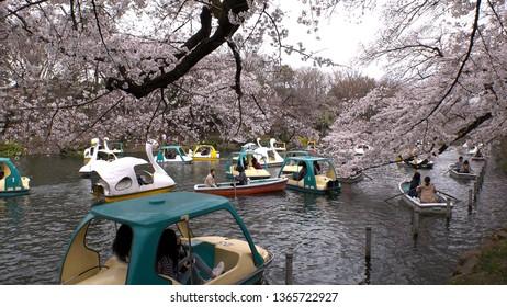 KICHIJOJI,  TOKYO,  JAPAN - CIRCA APRIL 2019 : Scenery of INOKASHIRA PARK in spring cherry blossom season.