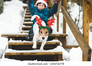 Kid boy and dog wearing holiday costumes playing on ladder of country house