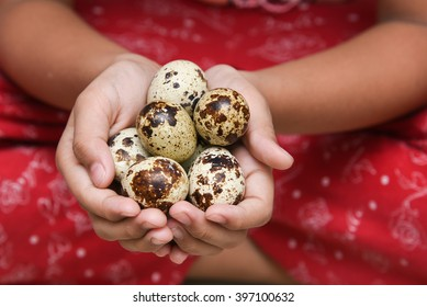 Kid / Child / Girl holding Easter quail eggs, Kerala, India. Life in hands of a Child. Many / handful of  quail eggs. They are rich in protein and micro-nutrients.