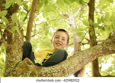A Kid Climbing a Tree