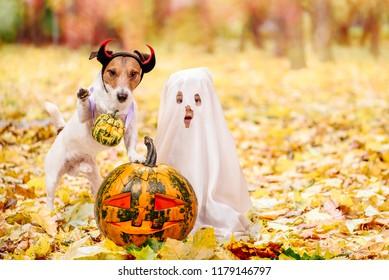 Kid and dog dressed in Halloween costumes with Jack o'lantern pumpkins