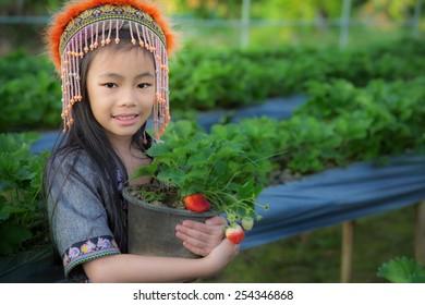 kid Farmers pick up strawberry from Doi Ang Khang plantation
