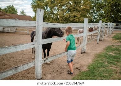 Kinder füttern ein Pferd. Kinderfütterung Tier auf einer Ranch an einem schönen Sommertag. Outdoor lustige Kinder.