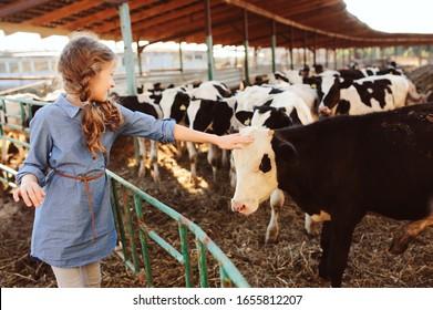 Junge Mädchen, die Kalb auf der Kuhfarm füttern. Landschaft, ländliches Leben, Landwirtschaftskonzept