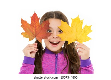 Kid girl hold fallen maple leaves. Happy small child play with autumn leaves. Kid isolated on white show leaves. Skin care concept. Fall colors are funny. They are so bright and intense and beautiful.