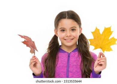 Kid girl hold fallen maple leaves. Happy small child play with autumn leaves. Kid isolated on white show leaves. Feelings of comfort and nostalgia we experience in autumn are hard to express.