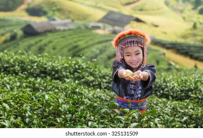 Kid and Green tea field in Angkhang, Chiang mai, Thailand