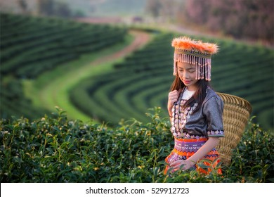 Kid and Green tea field in shui fong, Chiang rai, near Angkhang, Chiang mai, Thailand