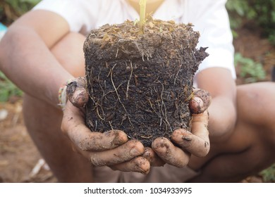 Kid hand holding tree for planting in garden from learning activity, student doing agriculture