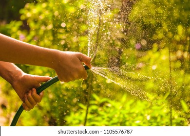 kid hands hold hose with squirting water on the summer sunny green garden background