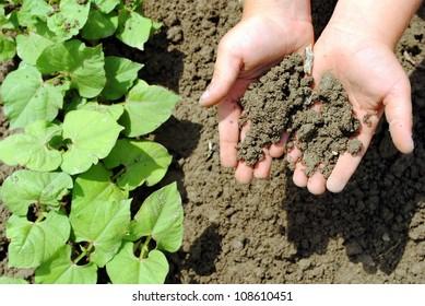 kid hands with soil in the garden
