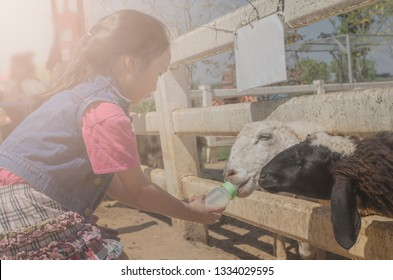 Kid happy to feed on sheep at zoo