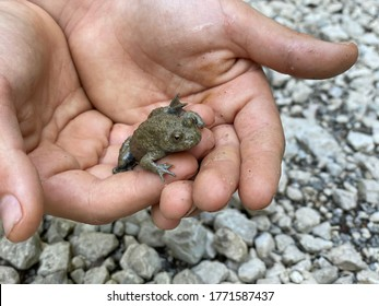 Kid holds in palms a little frog. Time with family, exploring nature concept