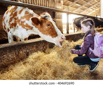 Kid at a milk farm feeding cow