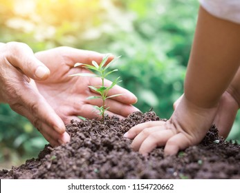Kid and mother hands planting young tree on the black soil,save world concept