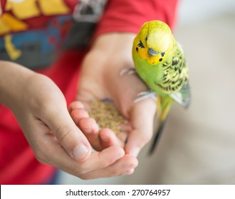 Kid playing with his pet parrot and feeding it