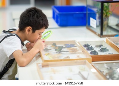 Kid study biology insect in the science class