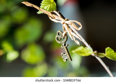 Kidney leaves of a birch spring macro on a black background. Vintage key hanging on a branch