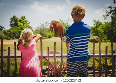 kids - boy and girl-looking at elephants in zoo