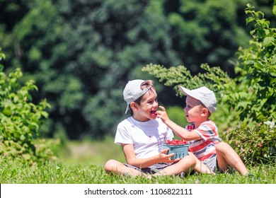 kids eat raspberries on a farm. boys feed each other berries. The concept of sharing. Copy space for your text. blurred background