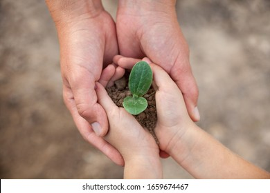 Kid's and grown-up's hands holding a young plant. New life. Parents and kids. Family. Love. Care, support and protection concept.