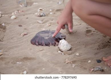 kids hand touching dead jellyfish