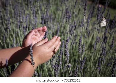 Kids hands butterfly lavender
