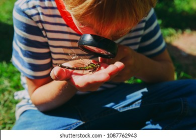 kids learning - little boy exploring dragonfly with magnifying glass