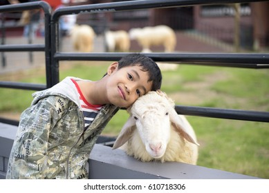 Kids love sheep