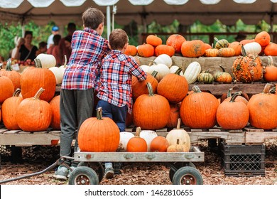 kids on a harvest festival at farm. children pick pumpkins at the farmers market