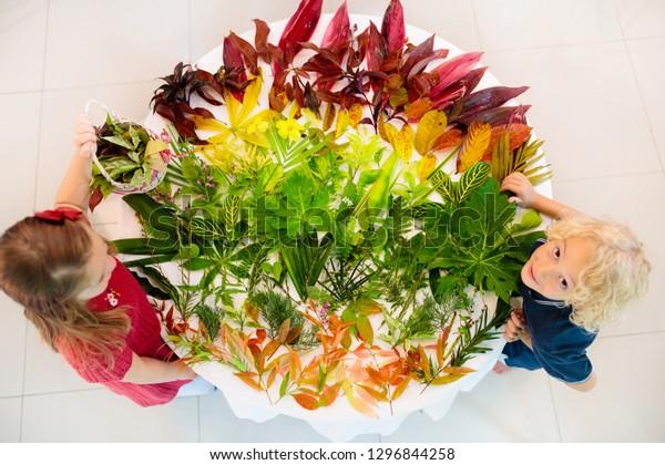 Kids Pick Colorful Autumn Leaves School Stock Photo (Edit
