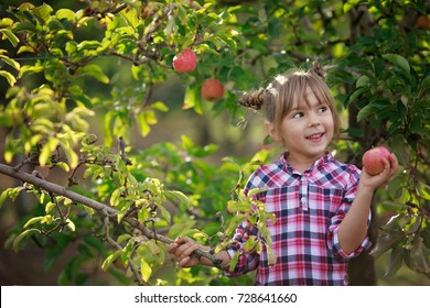 Kids picking fresh fruits and apples on a farm and orchid