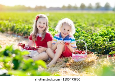Kids picking strawberry on fruit farm field on sunny summer day. Children pick fresh ripe organic strawberry in white basket on pick your own berry plantation. Boy and girl eating strawberries.