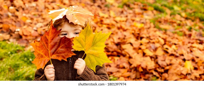 Kids play in autumn park. Children throwing yellow leaves. Child boy with oak and maple leaf. Fall foliage. Family outdoor fun in autumn. Toddler or preschooler in fall
