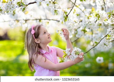Kids play in spring park. Little girl in sunny garden with blooming cherry and apple trees. Child playing outdoors. Kid watching flower blossom in sunny fruit orchard. Easter celebration.