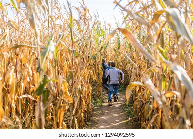 Kids running in corn maze in sunny autumn day in Lithuania