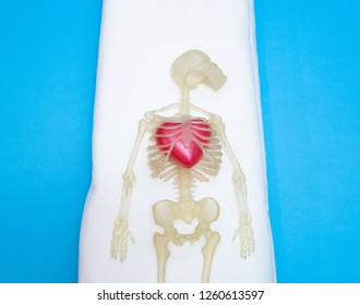 kids toy human body skeleton with big red heart inside chest. heart decease concept