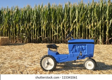 Kids tractor in ready to harvest cornfield