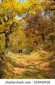 Kids trip to the autumn forest