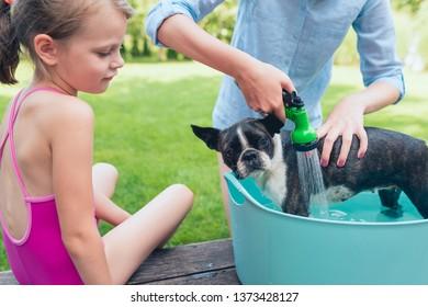 kids wash boston terrier puppy in blue basin  in summer garden on a wooden terrace