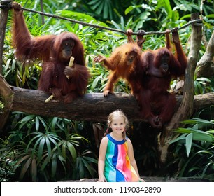Kids watch orangutan monkeys in zoo. Little girl with orangutans in tropical safari park on summer vacation in Asia.