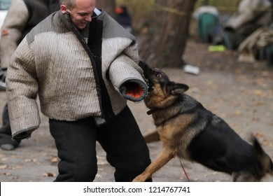 Kiev, Ukraine - October 27, 2018: A canine trainer dog. Aggressive dog bites canine in a special suit.