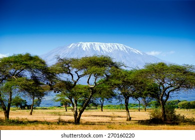 Kilimanjaro background