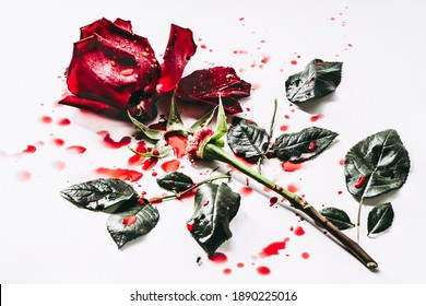 Killed dead and gutted rose bloody