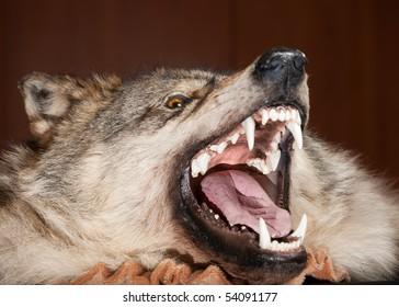 killed wild animal snout taxidermy